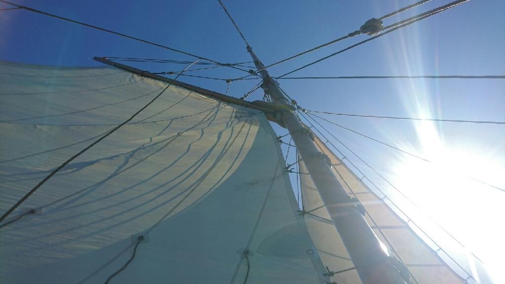 Spidsgatter Damkutter ( Tidl. båd ) billede 37