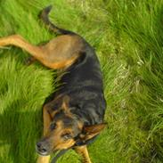 Min Hund :)