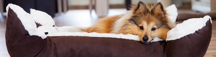 Hvordan finder man det bedste hundefoder til sin hund?
