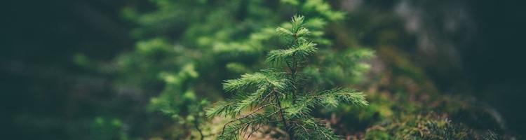 Brug naturen - Også om efteråret