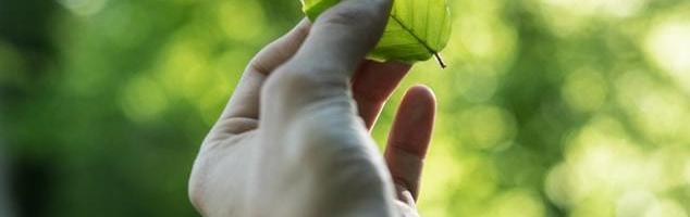 Tre bæredygtige valg du kan tage i fremtiden