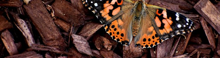 Skab et naturligt bunddække med barkflis i din have