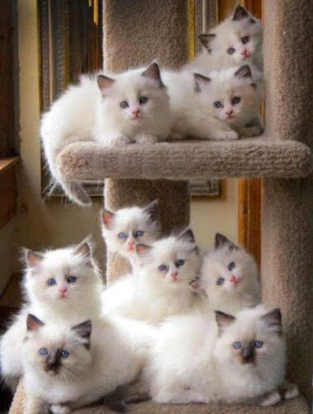 Kattetråd