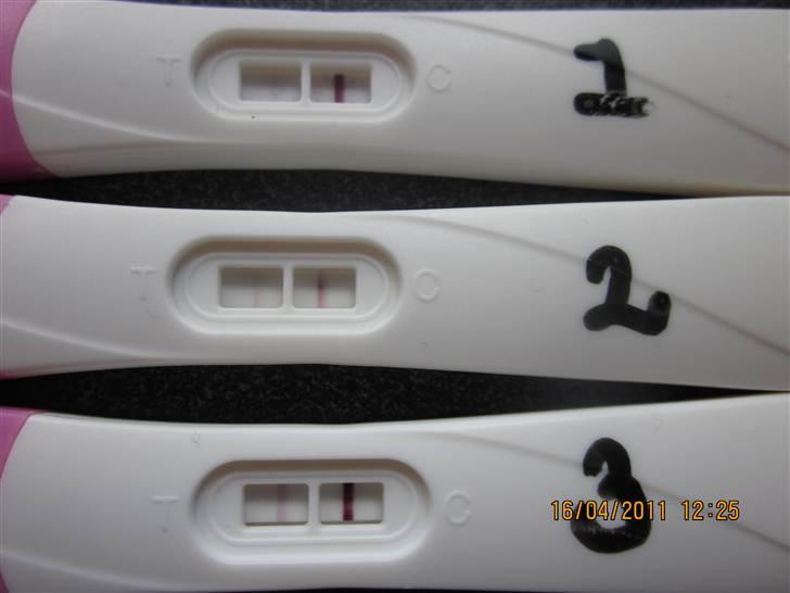 gravid 3 0