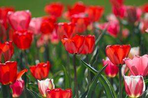 Giv blomster til kommende og nybagte forældre