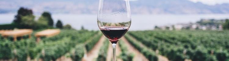 Økologisk vin der slår benene væk under dig