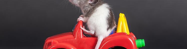 Beskyt din bil mod rotteangreb