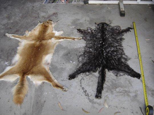 Kwon M Like A Cat