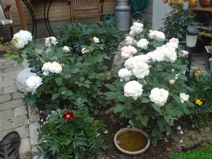 Forskellige blomster fra haven.   uderum   fotos fra karin