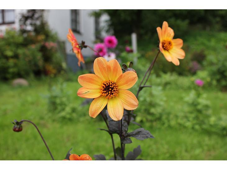 Billeder fra haven - Uderum - Uploadet af Signe K