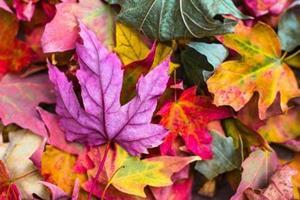 3 ting du ikke troede at du kunne om efteråret