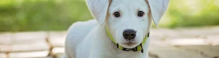 Tre gode råd til, hvor du skal sætte hundeburet hjemme
