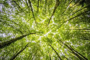 Tre måder du kan nedsætte din husstands klimaaftryk
