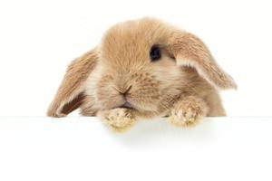 Derfor bør kæledyr ikke udsættes for passiv rygning – ...