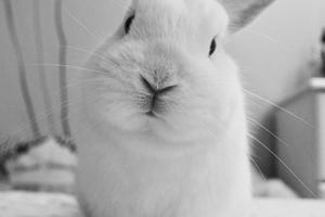 Gode råd til dig, som skal hente din første kanin