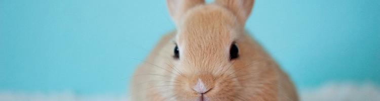 Tre gode råd, når du har købt din første kanin
