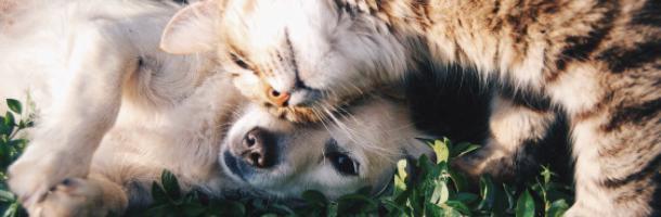 Generel artikel om CBD til dyr