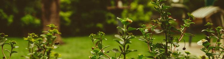 Hvordan skal du indrette din have?