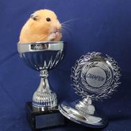 Loannis Hamsteri
