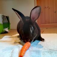 Yashikirin's kaniner - Patricia