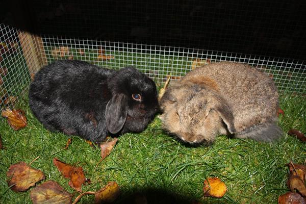 2 kaniner sammen