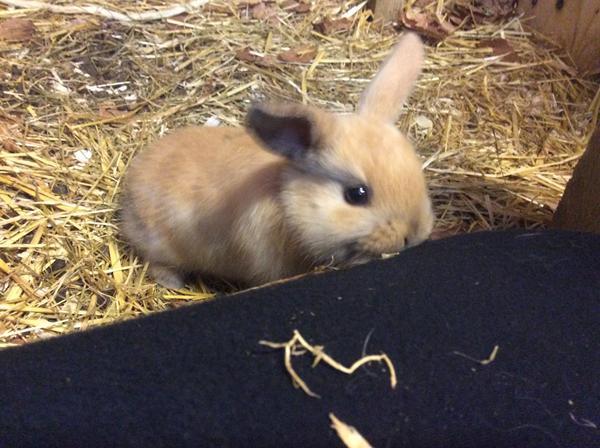 hvor mange unger kan en kanin få