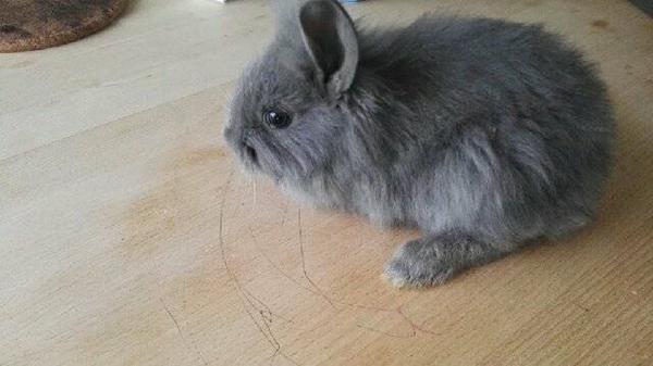 Han kanin navne