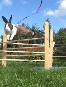 Kaninstævne
