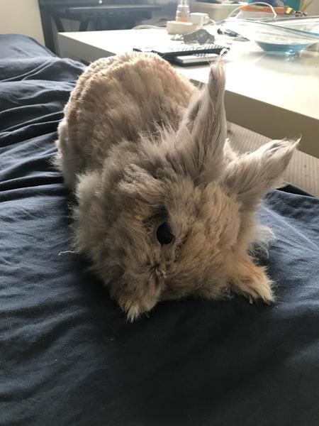 Vores kanin ligger mærkeligt med hovedet
