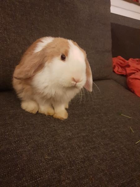 Hvad farve er min kanin?