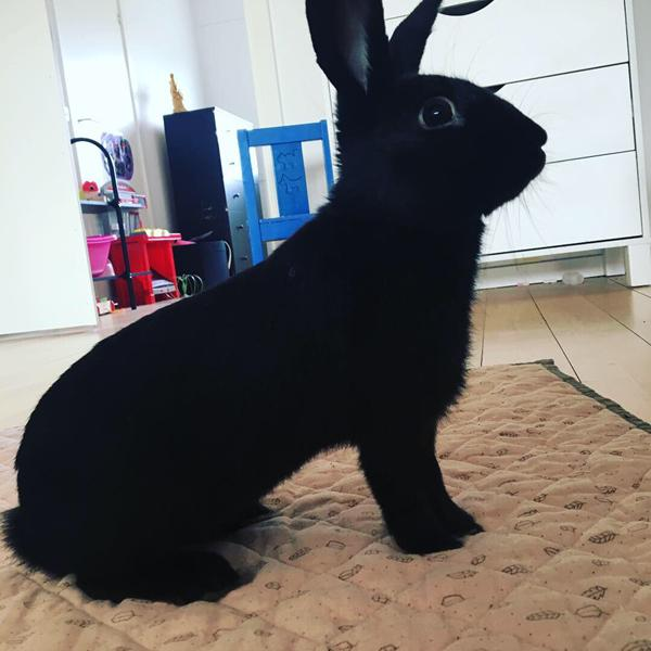 Foder til kanin