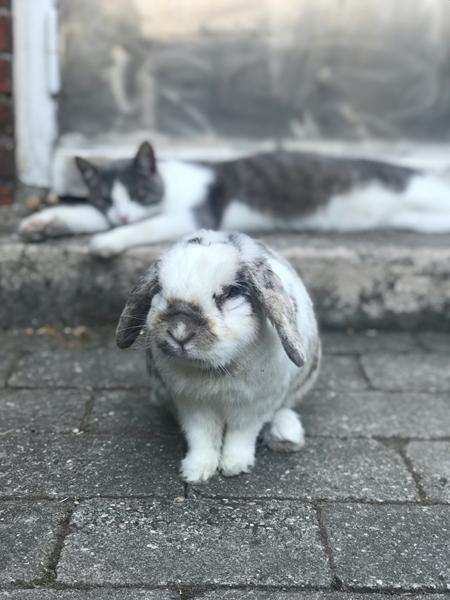 Minde af kanin