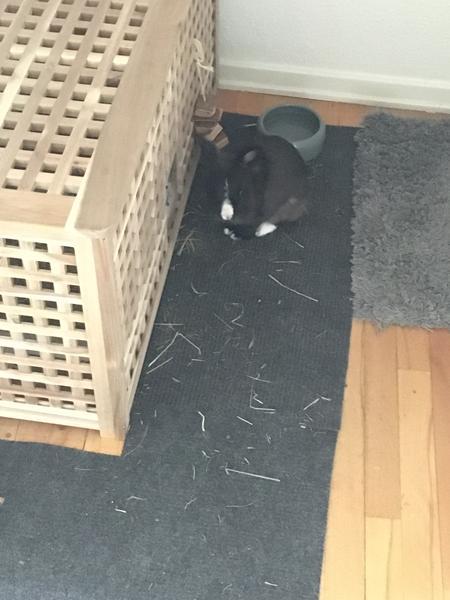 Kanin adfærd - virker trist og modløs!