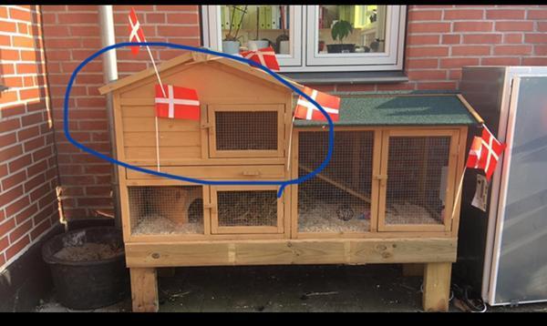 Kanin unger og bur