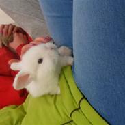 Kanin Tinky (Tinky Winky)<3