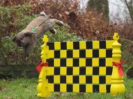 Kanin Lykkes Falcon