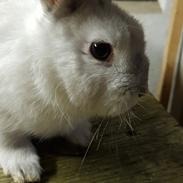 Kanin Snut