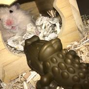 Hamster Loui (Lille Noah)