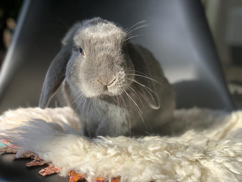Kanin Glade-kaniner's Wilson billede 3