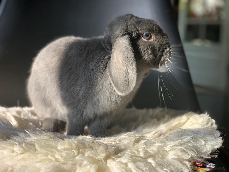 Kanin Glade-kaniner's Wilson billede 4