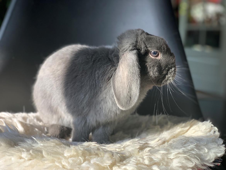 Kanin Glade-kaniner's Wilson billede 6