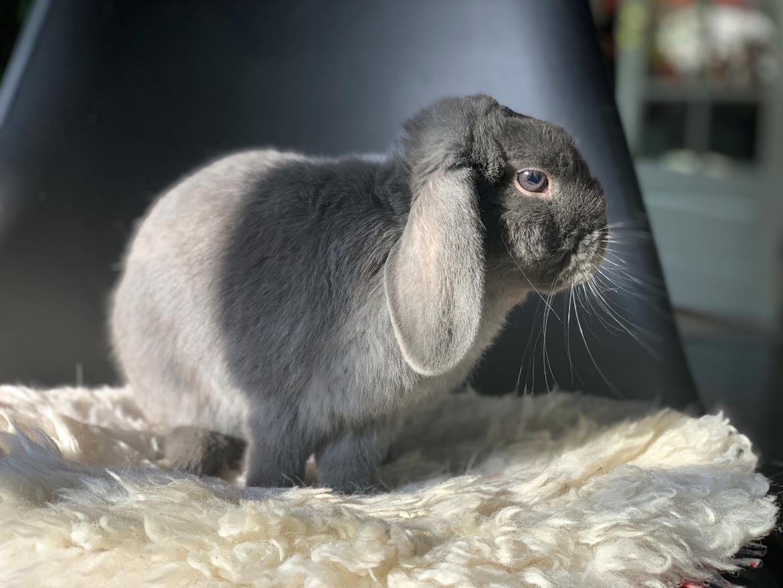 Kanin Glade-kaniner's Wilson billede 7