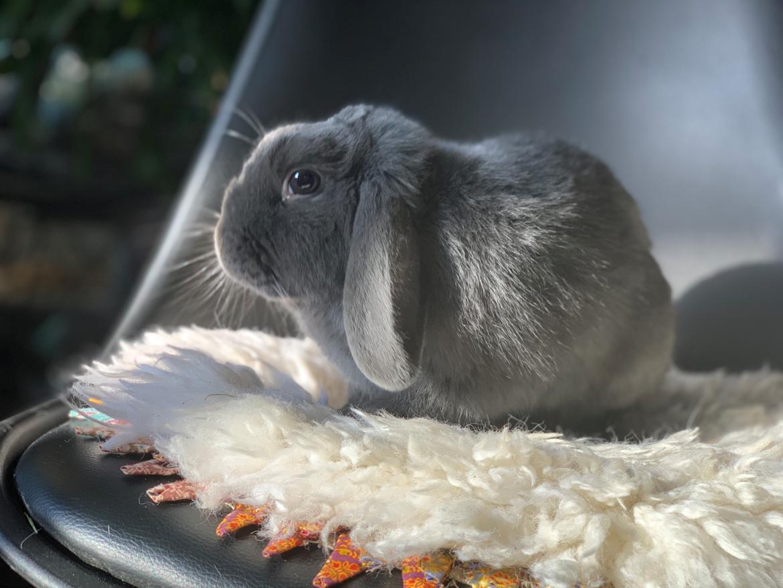 Kanin Glade-kaniner's Wilson billede 9