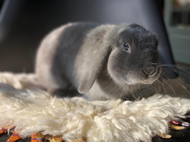 Kanin Glade-kaniner's Wilson billede 10
