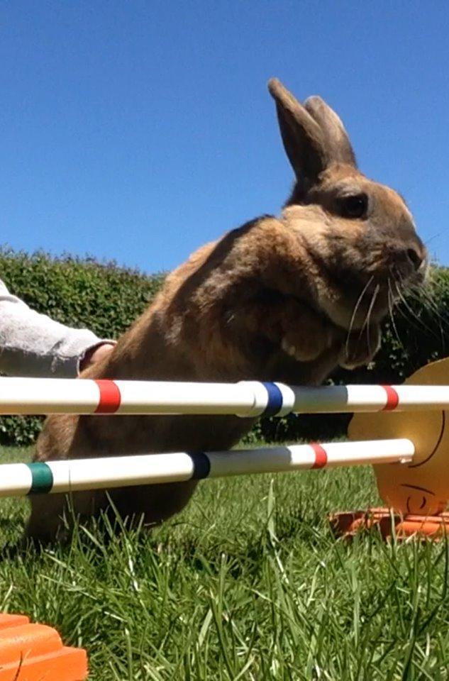 Kanin Sofie - Er jeg ikke dygtig😁 billede 1