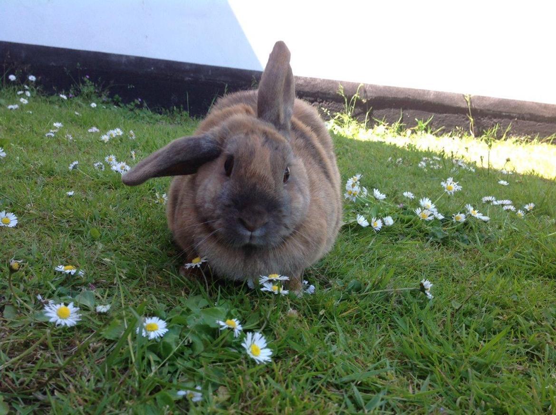 Kanin Sofie - min lille model<3 billede 2