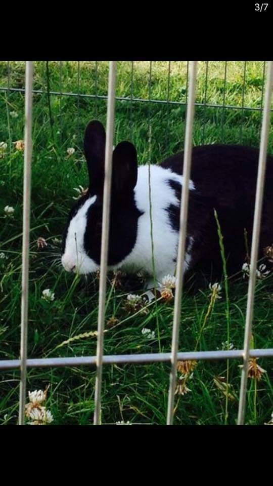 Kanin nusse  billede 3