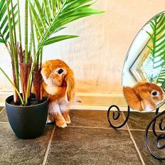 Kanin Bambi