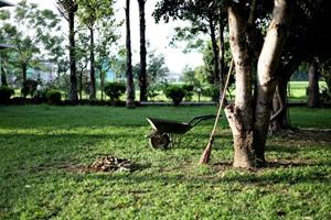 Tre tips til dig, der gerne vil have en smuk have i vi...