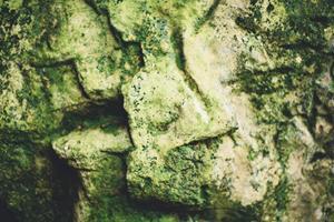 Få bugt med dine alger